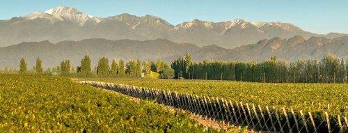 TOP vína Argentiny