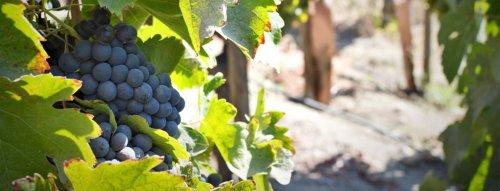 TOP vína odrůdy Cabernet Sauvignon