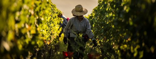 Top vína z Itálie