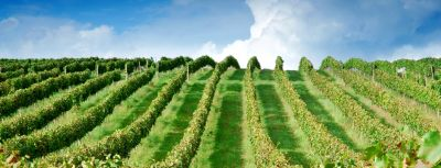 Rozhovor s vinařstvím Château Modra